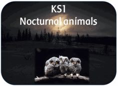 A 30 page PowerPoint file, explaining what nocturnal animals are; The animals include: Bats Owls Ba. Nocturnal Animals, Woodland Animals, Afraid Of The Dark, Light In The Dark, Animal Years, Owl Who, I Fall, Autumn, Year 2