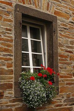 Love this window box!  Red geraniums in Alken, Germany.