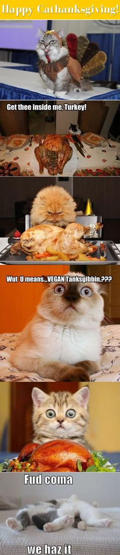 Have a happy Cathanksgiving!!---Funny cats in Thanksgiving!