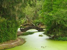 Jungle Gardens, Avery Island, Iberia Parish, Louisiana