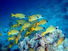 """Résultat de recherche d'images pour """"poissons jaunes"""""""
