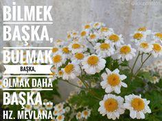 Bilmek başka  Bulmak başka  Olmak daha başka... Hz. Mevlana  #yakupcetincom #Bozkir #Konya #kx #bx #dx