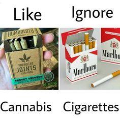 Quiz: Do more people smoke cannabis or cigarettes? #cannafo #cannabis #marijuana https://cannafo.com