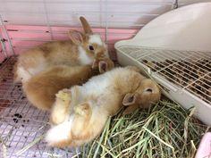 バニーファミリー横浜店 (@bunnyfamily) | Twitter