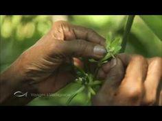DESTINATION VANILLE, voici l'extrait du reportage de Thalassa qui m'a été consacré, sur  la vanille bourbon de Madagascar. Vous allez découvrir le chemin fait par notre vanille bourbon de Madagascar pour arriver jusqu'à notre étal de marché ou chez vous.   Le Comptoir de Toamasina sélectionne les meilleurs gousses de vanille bourbon de Madagascar venez les découvrir Agriculture Durable, Vanille Bourbon, 9 Mai, Madagascar, Voici, Market Stalls, Counter Top, World