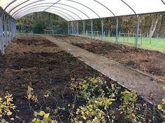 Fruit Tunnel and Hopwood Kitchen Garden