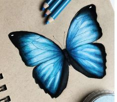 I drew this blue butterfly and I really like how it turned out! Art Drawings Sketches Simple, Pencil Art Drawings, Realistic Drawings, Colorful Drawings, Colored Pencil Artwork, Color Pencil Art, Butterfly Drawing, Blue Butterfly, Arte Inspo