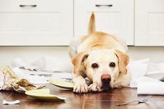 ¿Qué provoca la desobediencia en nuestros perros? - Mis animales