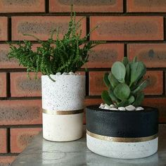 Ash&Lime concrete pots. Tall pot in cream concrete, with white granite and gold accent. Matte black chunky pot in grey concrete with gold accent. Photo credit to Ash&Lime Perth, Western Australia www.ashandlime.com.au