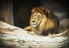 Denver Zoo Animals | Animals of the Denver Zoo | Elimar Trujillo Photography | Pinterest