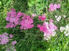 Mein wundervoller Garten: Im Ziergarten gibt es das ganze Jahr über etwas zu sehen. Blühende Pflanzen und Blumen, bunte Sträucher, aber auch Hecken und eine Rasenfläche gehören dazu.