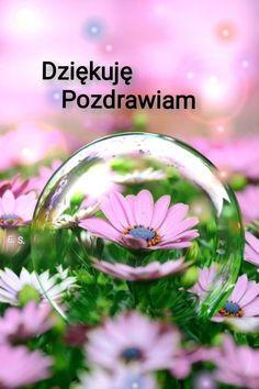 Good Morning Quotes, Happy Sunday, Christmas Bulbs, Holiday Decor, Plants, Christmas Light Bulbs, Flora, Plant, Planting