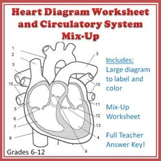 A clear, ready-to-print heart diagram worksheet that includes the valves as well as the chambers and blood vessels of the heart. On the back, there is a mix-up worksheet that encourages students to trace a blood cell throughout the whole body. For grades 6-12 (advanced middle school and average high school levels).