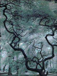 Tree cold atmosphere in Montclair, New Jersey ! Tree cold atmosphere in Montclair, New Jersey ! All Nature, Nature Tree, Amazing Nature, Tree Forest, Tree Art, Tree Of Life, Belle Photo, Mother Earth, Beautiful World