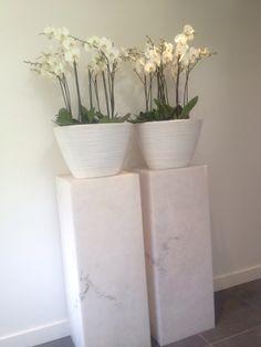 Plants # orchid white # zuilen