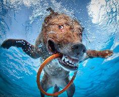 Underwater Dogs | Seth Casteel
