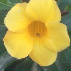 Spider in a flower