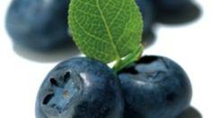 L'estratto di mirtillo nero è ricco di antiossidanti, utili per rinforzare i capillari e per problemi di circolazione venosa. Scopri tutte le proprietà.