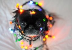 dog, cute, and light-bild