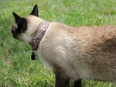 Follow Wired     Twitter     Facebook     RSS  How to Use Your Cat to Hack Your Neighbor's Wi-Fi  By Andy Greenberg, Coco, modeling the WarKitteh collar.
