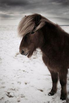 Pony #Animals