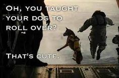 Military War Working K9 Hero!