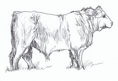 Percy's Bull - ink