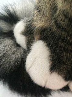Cat feet, my cat!