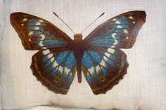 Decorative Pillow - Ivory Linen Pillow - Blue Butterfly pillow - 12x16 - Stuffed ready to use on Etsy, $17.00