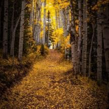 Through the Forest by Jason Hatfield