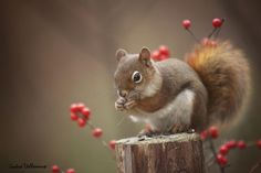 The red before the white by Andre Villeneuve on 500px