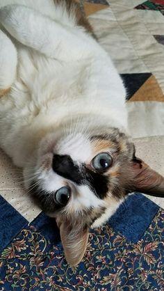 #cat#cats#kitten#kittens#kitty#kitties#cute#fluffy#animal#animals#pet#study