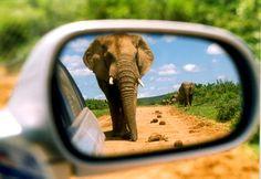 Down the road #JSElephant