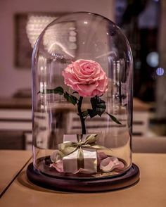 Beauty and The Beast Enchanted Rose Glass Dome LED Romantic Christmas Gift Decor for sale online Enchanted Rose, Tout Rose, Forever Rose, Jolie Photo, Romantic Gifts, Real Beauty, Glass Domes, Pink Aesthetic, Cute Wallpapers