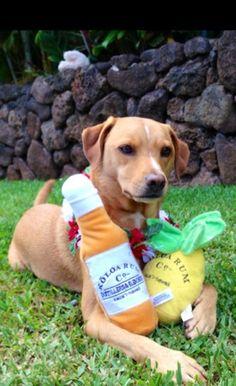 Mango with Koloa Rum Dog Toys