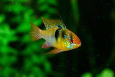 Stocking a 5 gallon fish tank – Aquariadise
