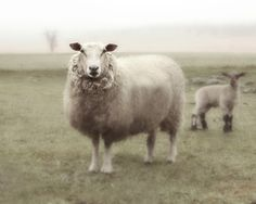 Sheep Art French Country Nursery Photo Fine Art Photography Ewe and Lamb in the Fog 8x10. $20.00, via Etsy.