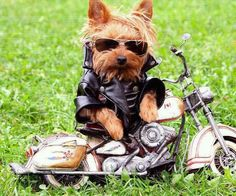 Heading out to Sturgis....gotta roll!