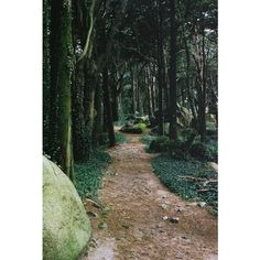 au fond des bois... ❤ liked on Polyvore featuring backgrounds, photos, pictures, green and fotos