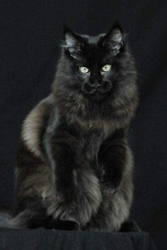 Siberian Farm Cats Have Absolutely Taken Over This Farmers Land - Meet scrappy 19 year old black cat grew unique marble fur due rare skin condition