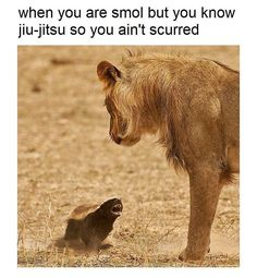 Top 10 (and Only) Reasons Why The Honey Badger Should Be Your Spirit Animal Animals And Pets, Funny Animals, Cute Animals, Wild Animals, Exotic Animals, Small Animals, Funny Cats, Most Aggressive Animals, Bjj Memes
