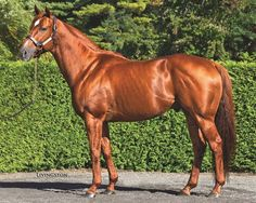 D' Funnybone is a 9 year old chestnut Thoroughbred stallion who stands at 15.3hh.