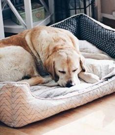 Die 34 Besten Bilder Von Hundekörbchen Nähen Pets Dog Cat Und