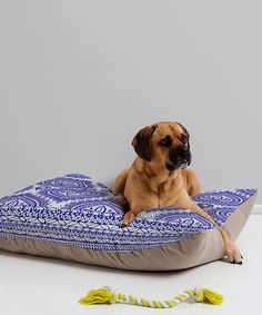 Love this Aimee St. Hill Decorative Blue Pet Bed by DENY Designs on #zulily! #zulilyfinds