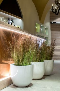 Three fibreglass planters from the BOTTAS series decorate an interior area with their elegant surface in white. For more plant pots made of fibreglass visit: https://www.planters-online.co.uk/planters-fibreglass-flower-pots/.