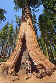 The Human Scale, Sequoia National Park, CA Copyright: Chris Bard