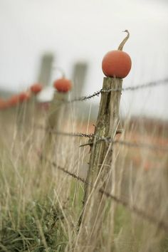Country Living ... country charm with pumpkins and a fence