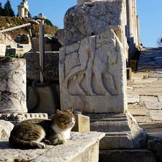 If you already have been to #Ephesus you already saw lots of cats who are living there :-) #ephesuscats