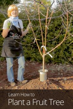 How to Plant a Fruit Tree Instructions Learn how to grow strawberries in this post. These sweet, popular fruit can easily grow in. Fruit Garden, Garden Trees, Edible Garden, Vegetable Garden, Garden Plants, Growing Plants, Growing Vegetables, Tree Care, Farm Gardens