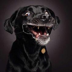 Cães fazem expressões bizarras tentando pegar biscoitos no ar em ensaio de fotógrafo alemão.